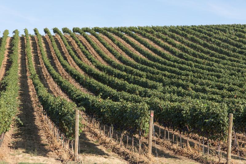 Vineyard - Walla Walla 29
