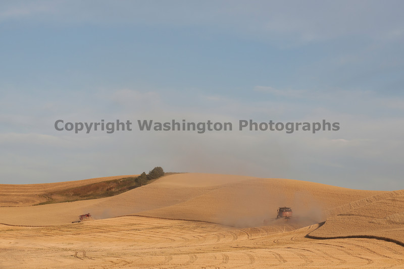 Wheat Harvest 136