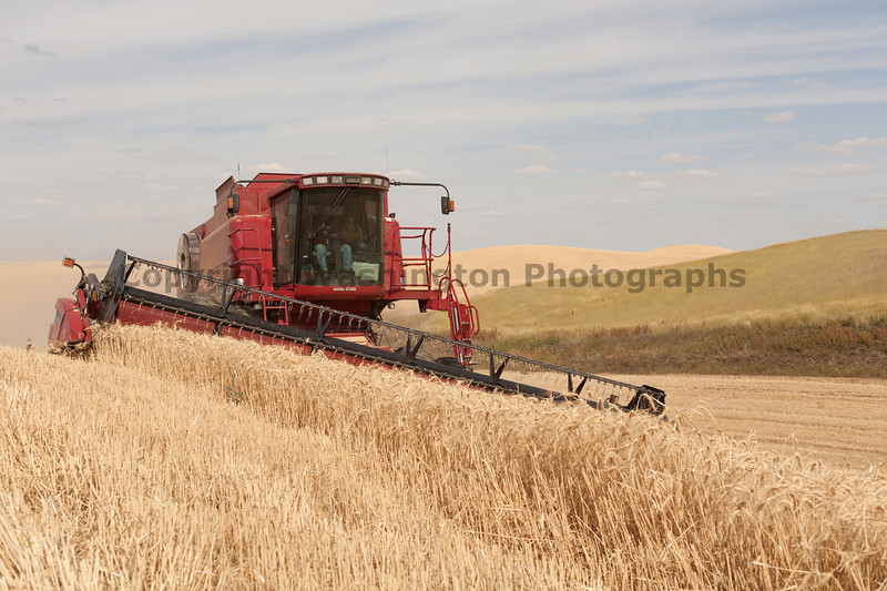 Wheat Harvest 117