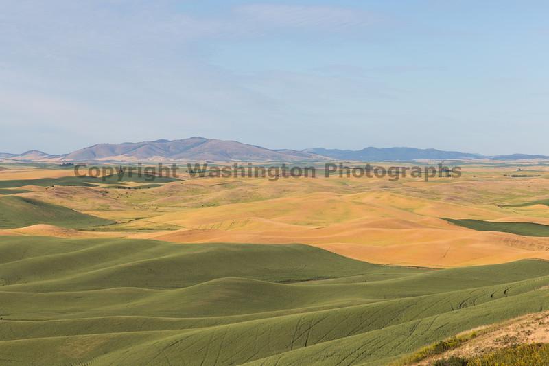 Steptoe Butte Spring 205