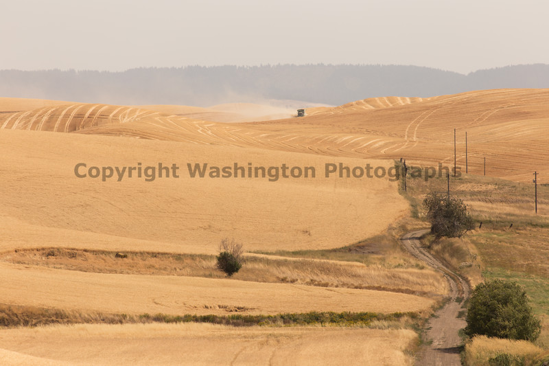 Wheat Fields in Summer 120
