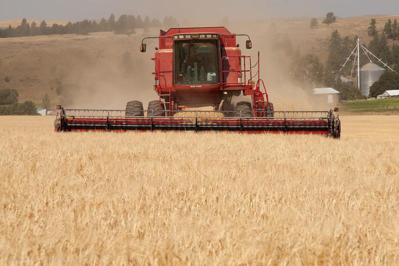 Wheat Harvest 68