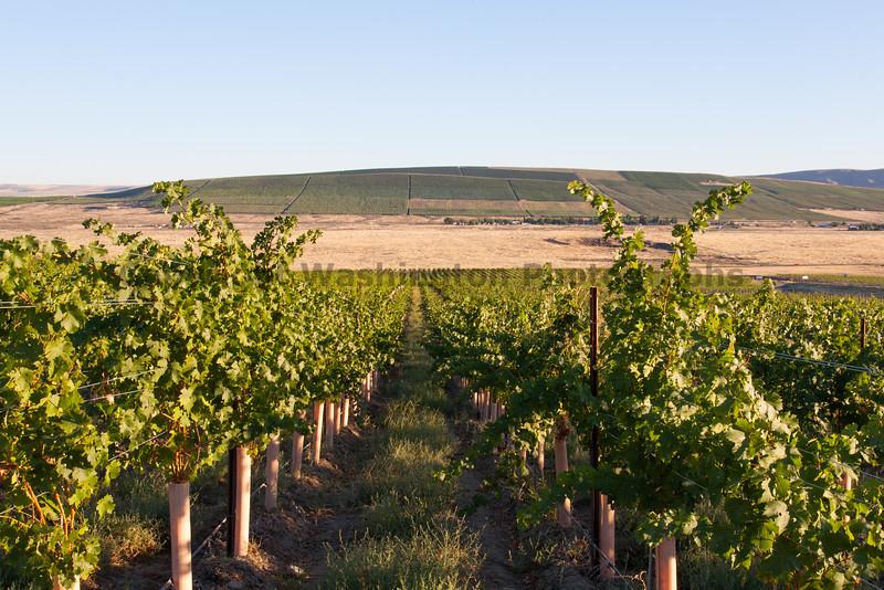 Vineyard - Red Mountain 108