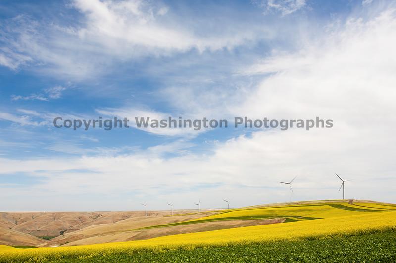 Wind Farm Spring 48
