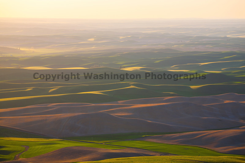 Steptoe Butte Spring 159