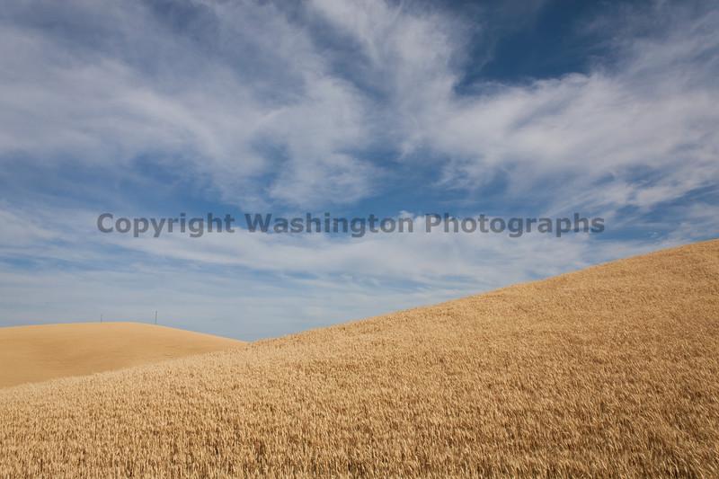 Wheat Fields in Summer 87