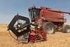 Wheat Harvest 176