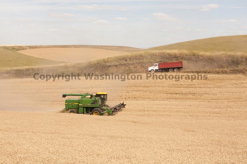 Wheat Harvest 111