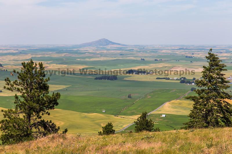 Wheat Fields from Skyline Drive 12