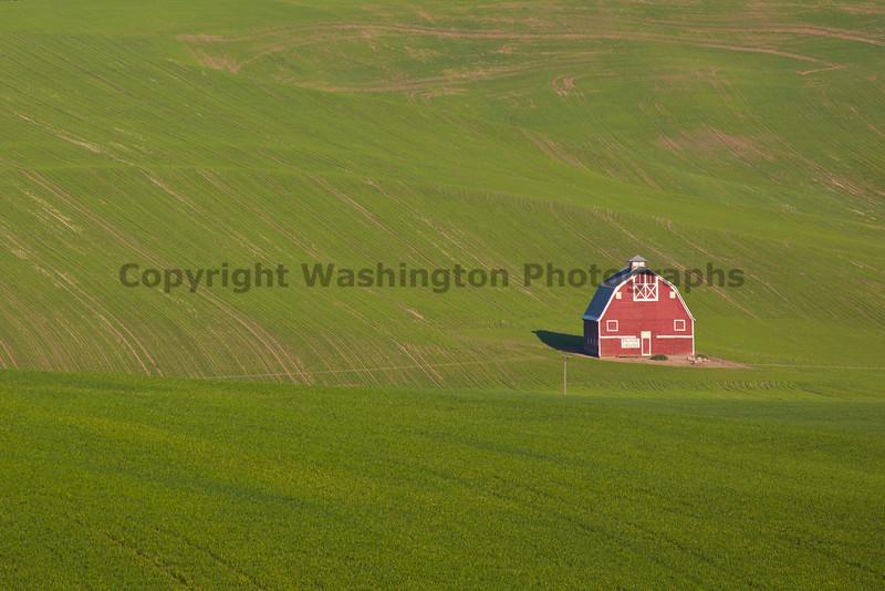 Wheat Fields in Spring 122