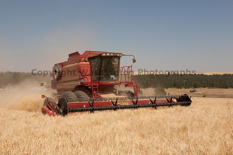 Wheat Harvest 63