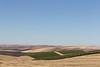 Vineyard - Walla Walla 24