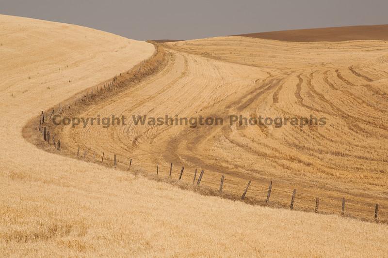 Wheat Fields in Summer 49