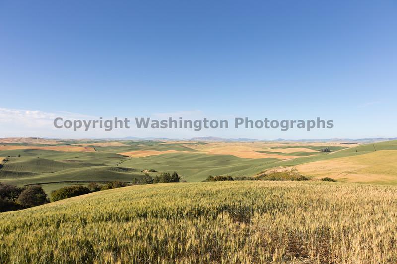 Steptoe Butte Spring 200