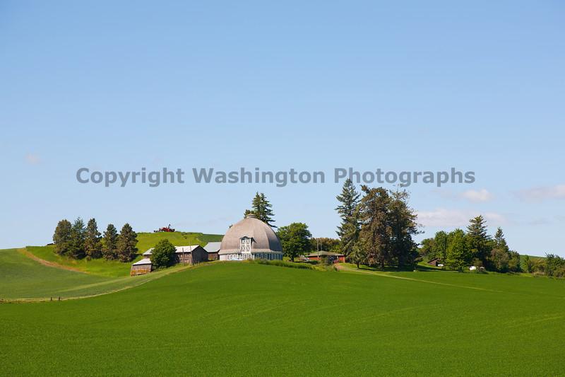 Wheat Fields in Spring 11