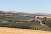 Vineyard - Snipes Mountain 16