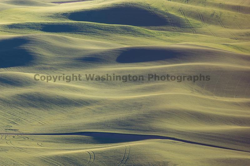 Steptoe Butte Spring 232