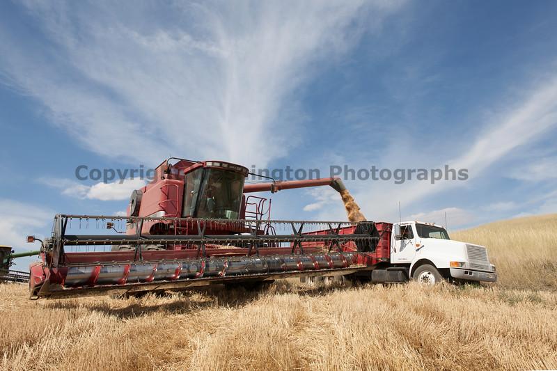 Wheat Harvest 101