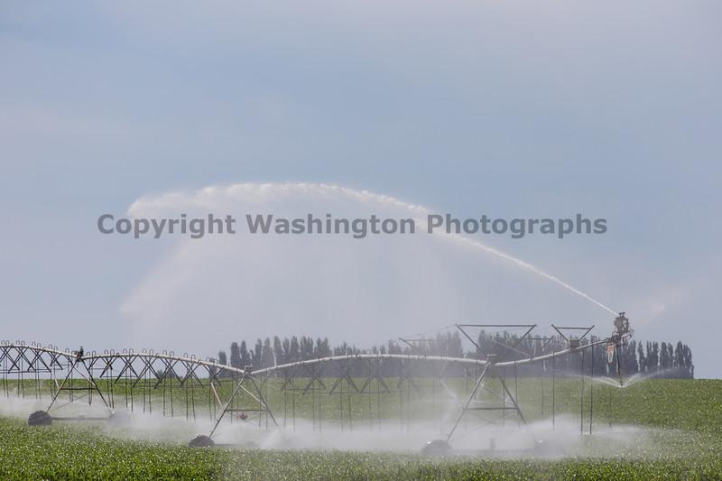 Cornfield Sprinkler 16