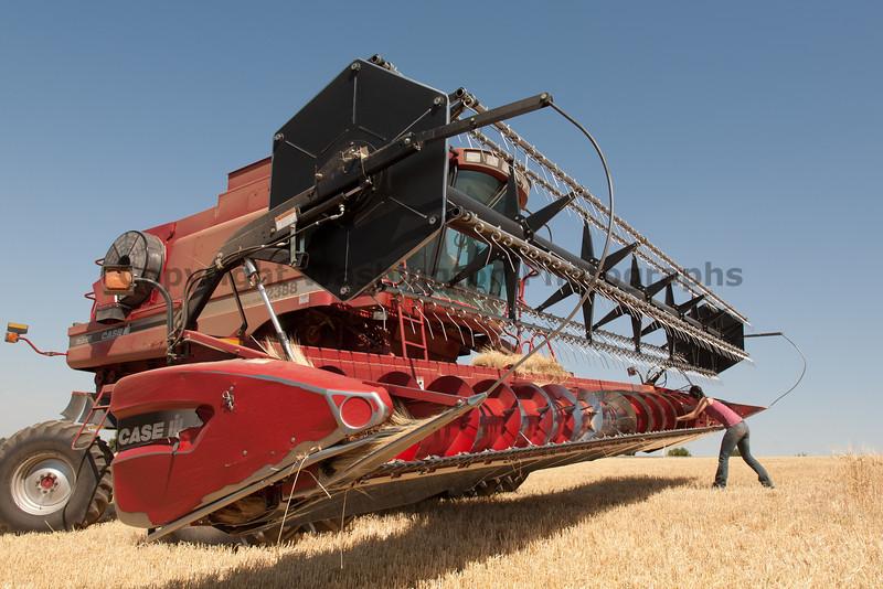 Wheat Harvest 74