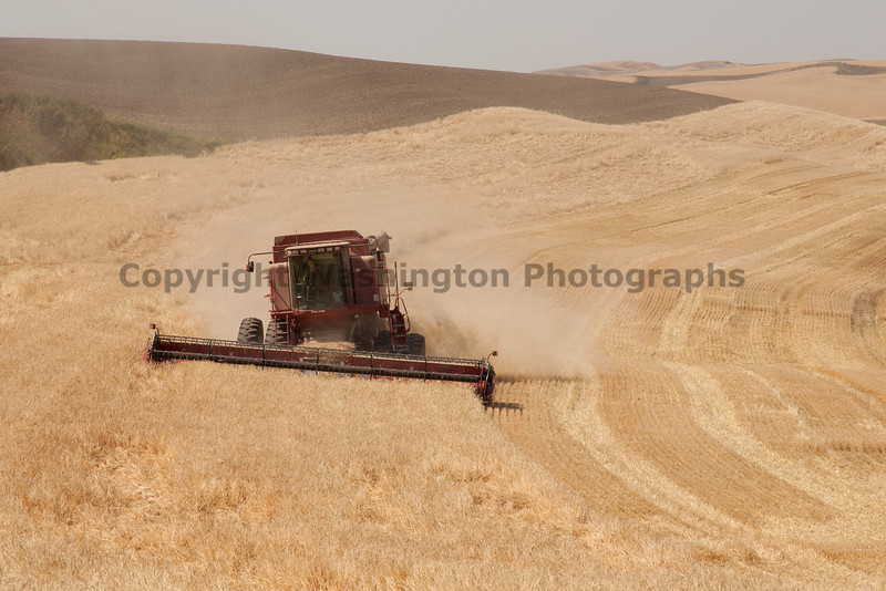 Wheat Harvest 79