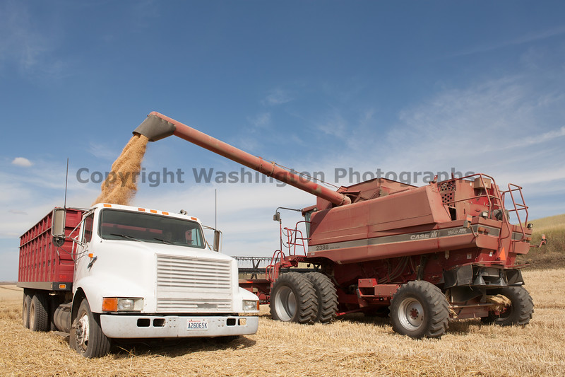 Wheat Harvest 121