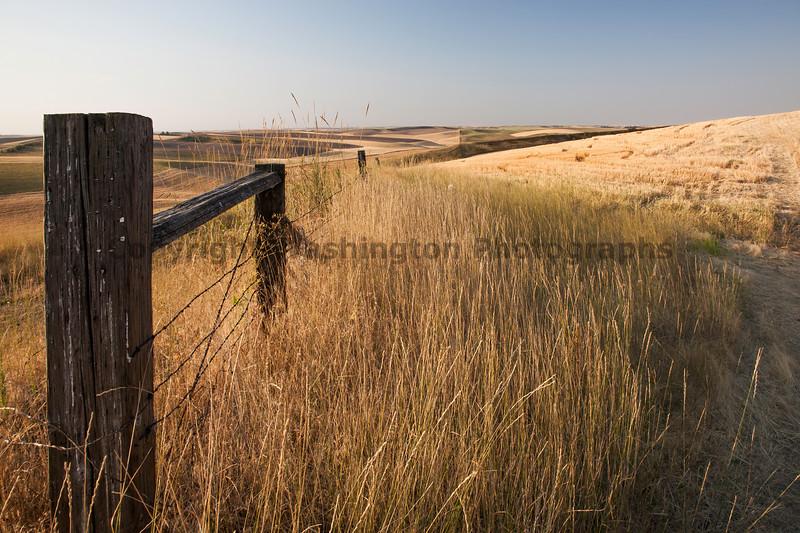 Wheat Fields in Summer 55