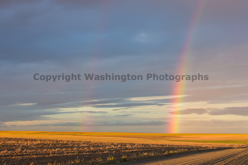 Rainbow Field 10