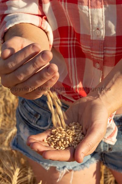 Wheat Farm Girl 289