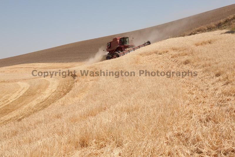 Wheat Harvest 85
