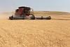 Wheat Harvest 173