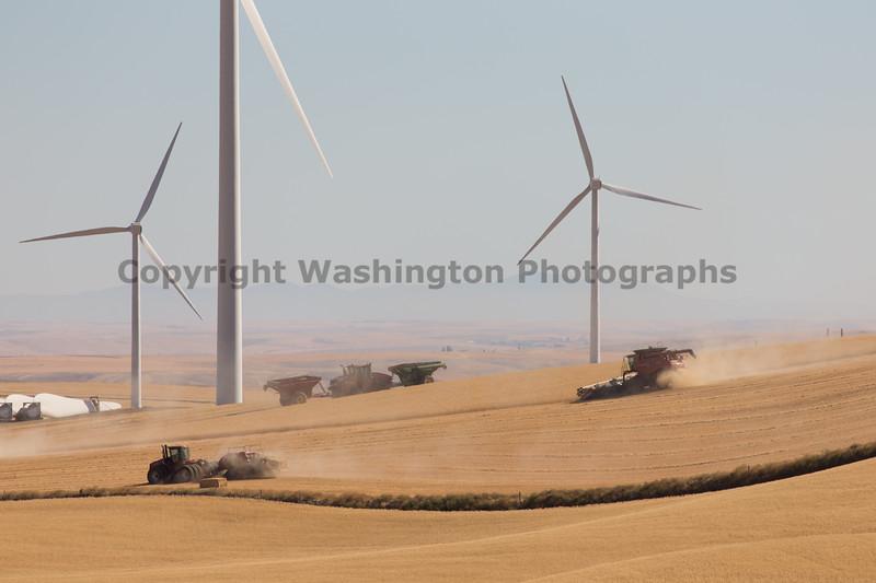 Wheat Harvest 144