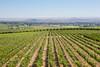 Vineyard - Rattlesnake Hills 101