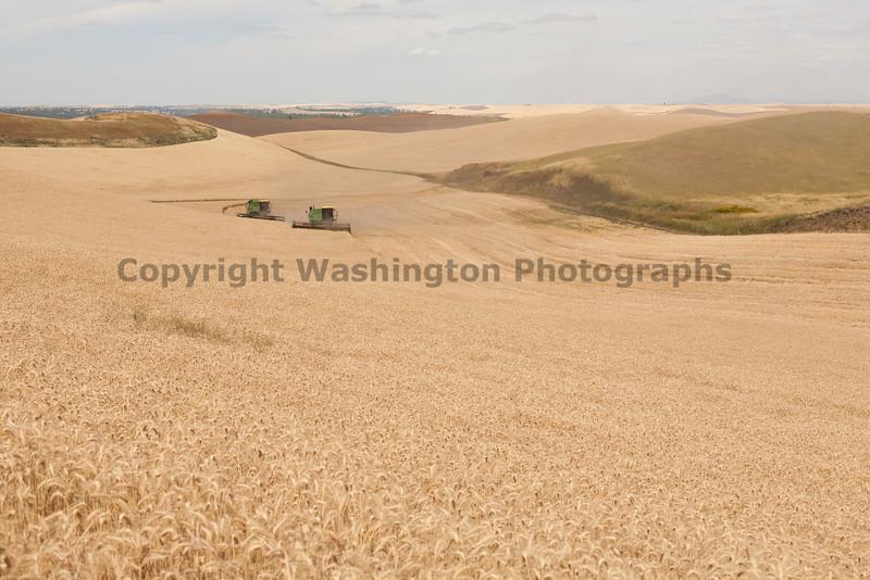Wheat Harvest 109