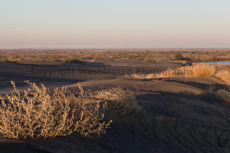 Moses Lake Sand Dunes 21