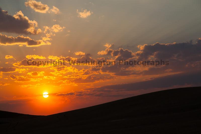 Wheat Field Sunset 16