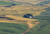 Steptoe Butte Spring 239