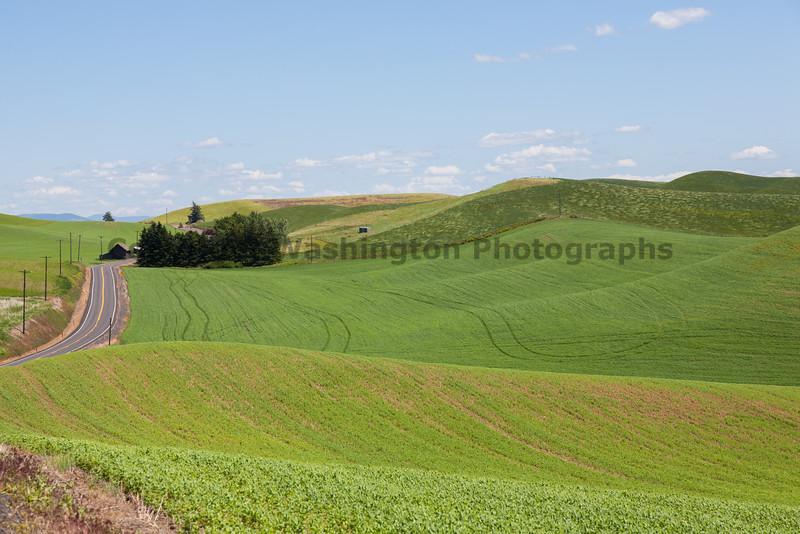Lentil Fields 13