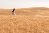 Wheat Field Girl 173