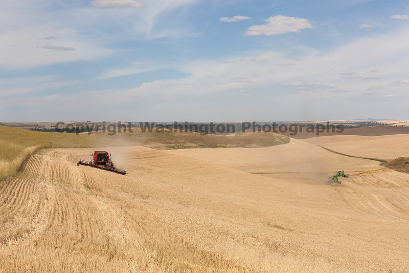 Wheat Harvest 105