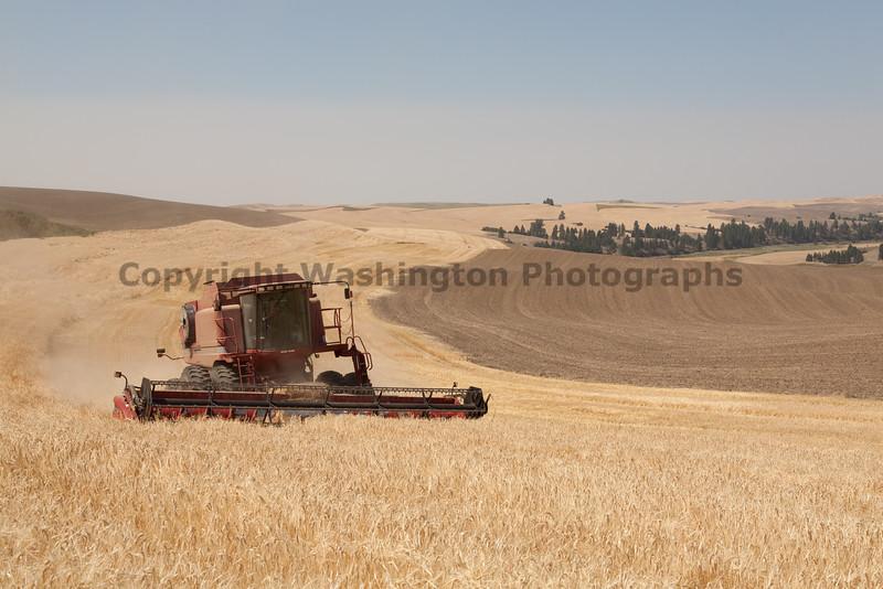 Wheat Harvest 82