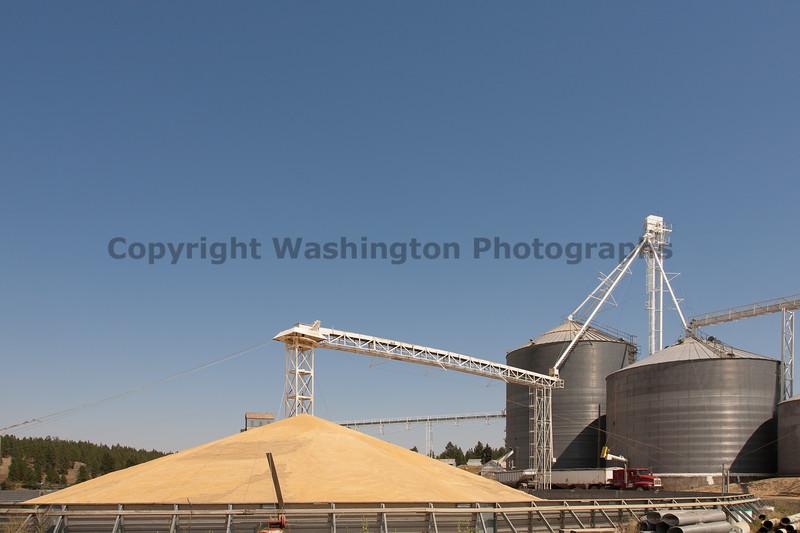 Wheat Harvest 129