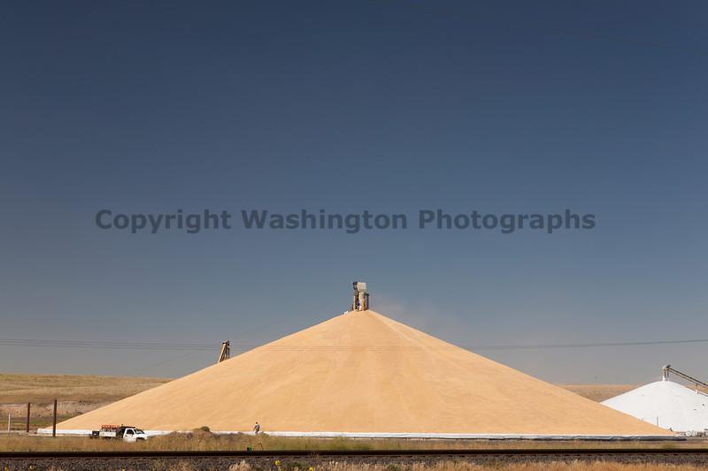 Wheat Mountain 19