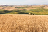 Steptoe Butte Summer 59