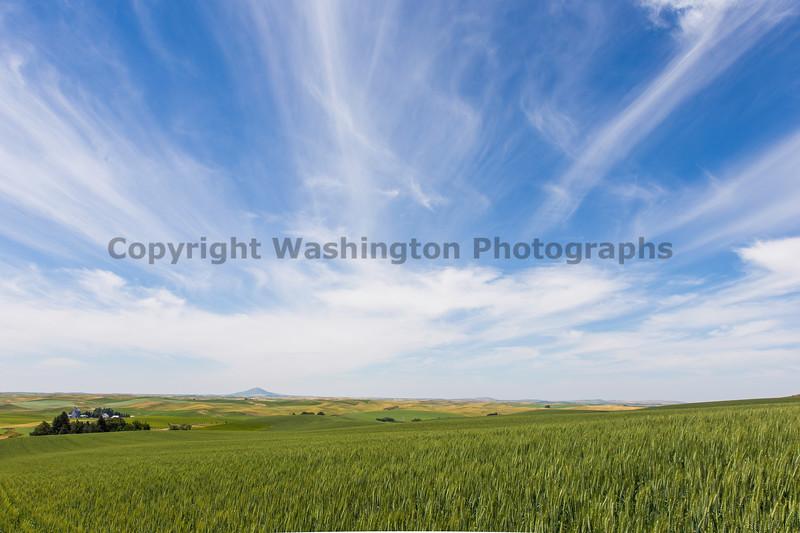 Wheat Fields from Skyline Drive 27