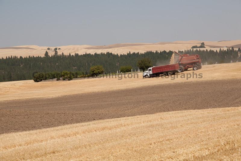 Wheat Harvest 84