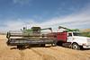 Wheat Harvest 122