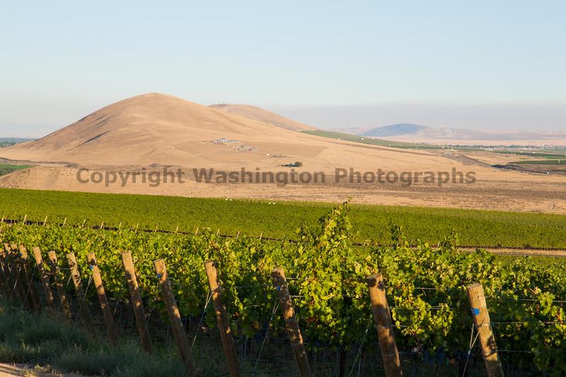 Vineyard - Red Mountain 107