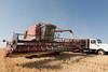 Wheat Harvest 66