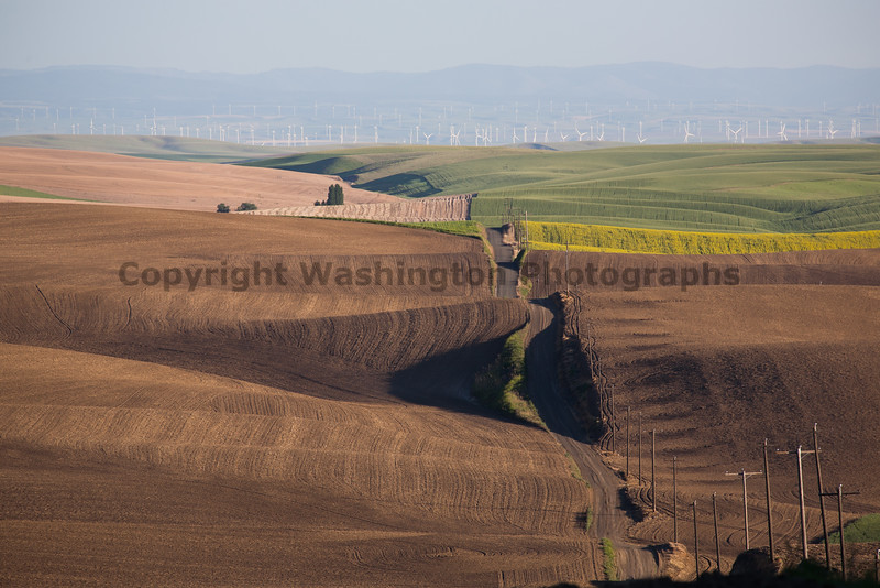 Wheat Fields in Spring 105